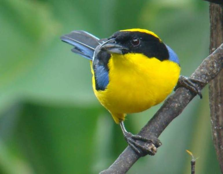 Bird Fair 3