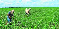 Sector agroindustrial en la búsqueda de personal especializado